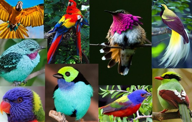 colorful bird collage